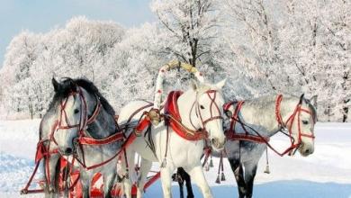 Новогодишна приказка в Сибир