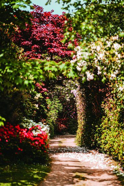 Текстурата в градината