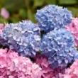 Сини градини