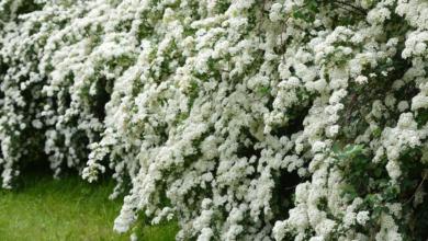 Храстите-плътността и структурата на градината