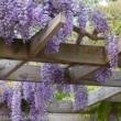 Катерливи, пълзящи и увивни растения